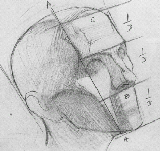 CONSTRUCTION OF THE HEAD